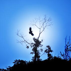 Fly in the sky by Lê Thị Thanh  Tâm - Animals Birds