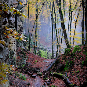 Devils Gorge, Luxemburg by Michael Shaffer - Landscapes Forests ( luxemburg, michael shaffer, luxembourg, nature, devils gorge, fog, color, michael, fall, trail, trees, shaffer, lux )