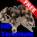 HD Tarantula 3D LWP FREE icon