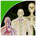 Biology & Human Anatomy icon