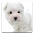 Dog Wallpapers! APK for Blackberry
