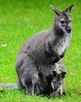Screenshot of Baby Animals