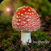 Mushroom Id - British Fungi