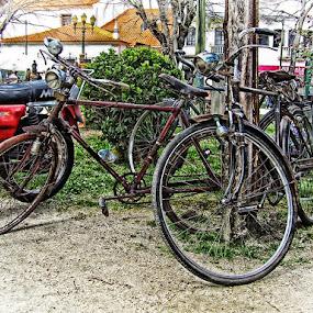 Pasteleiras by José Sobral - Transportation Bicycles