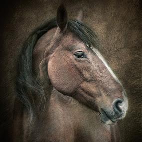 Horse Portrait by Joan Blease - Digital Art Animals ( horse portrait, creative, horse, digital art, chestnut horse )
