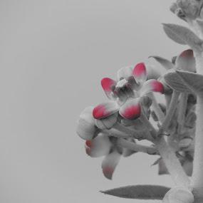 Purpel by Rahul Savaliya - Nature Up Close Gardens & Produce (  )