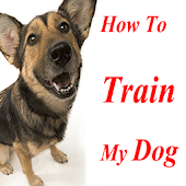 How To Train My Dog