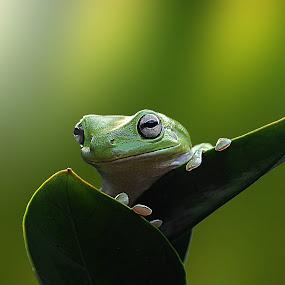 ^^ looking around ^^ by Andri Priyadi - Animals Amphibians (  )