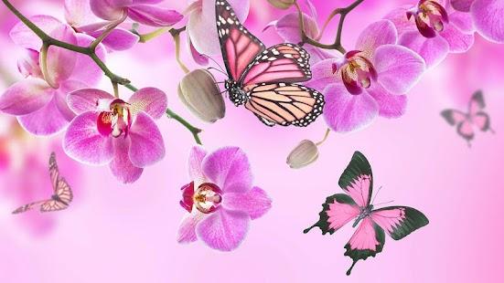 粉紅色 花卉動態壁紙