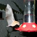 Orange Nectar Bat