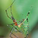 Decorative Silver Orb Spider