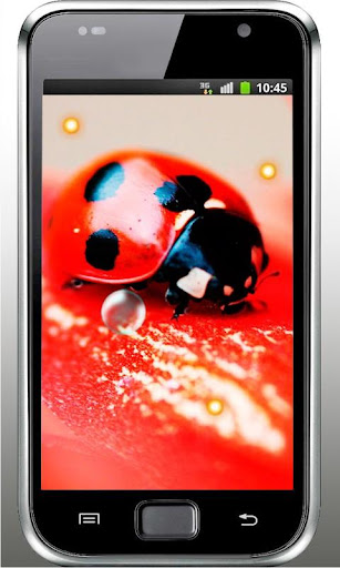 Ladybirds Free live wallpaper
