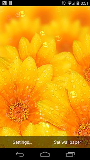 雨天夢幻繽紛花朵壁紙