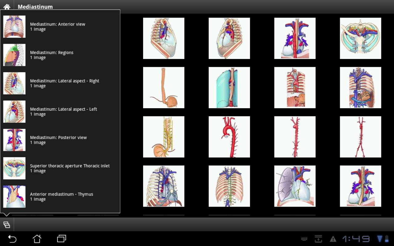 IMAIOS e-Anatomy - screenshot
