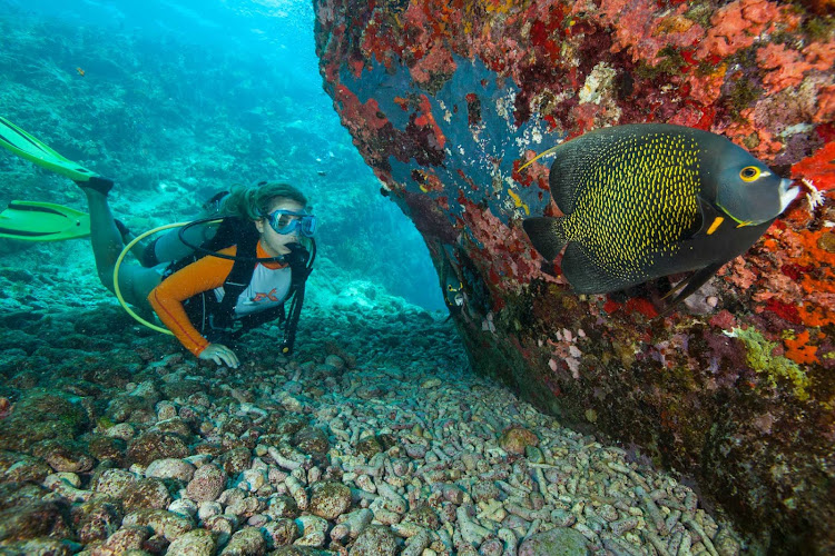 A young scuba diver spies a tropical fish at Cow Rocks on the southeast coast of St. Thomas in the US Virgin Islands. The site, about a 45-minute boat ride from Charlotte Amalie, offers the island's best diving.