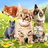 Kitty Cats HD Live Wallpaper