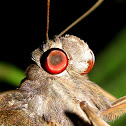 Giant red eye