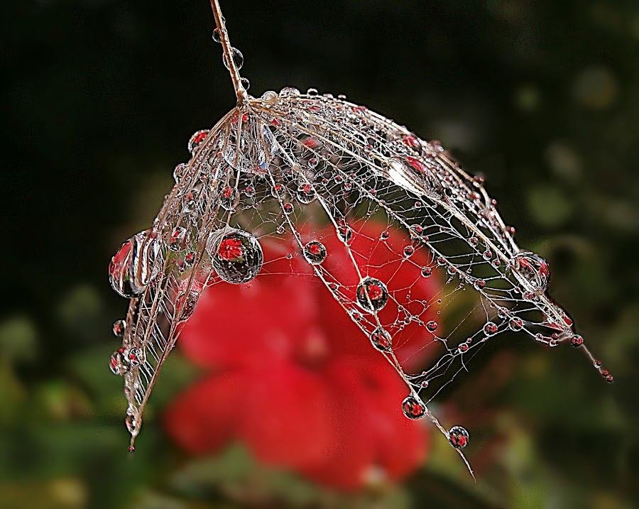 Under Beauty Protection -  Mirror of kindness by Marija Jilek - Nature Up Close Natural Waterdrops ( water, a seed, nature, goat-beard, plants, sunlight, waterdrops, flower )