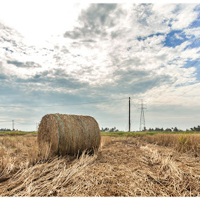 Paddy Field Hay Bales by Coolvin Tan - Landscapes Cloud Formations