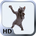 Dancing Cat HD Live Wallpaper icon