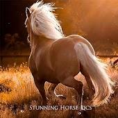 Stunning Horse Pics