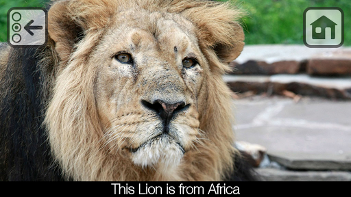 Free 100 Zoo Animals