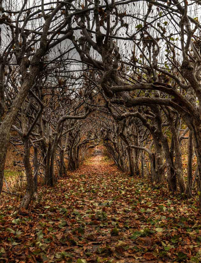Rød alle by Jan Myhrehagen - Nature Up Close Trees & Bushes ( fall leaves on ground, fall leaves, views, earth, landscapes, light )