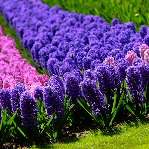 pink and purple flowers-2.jpg