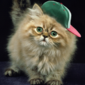 Ginger Cat Cute Wallpaper icon