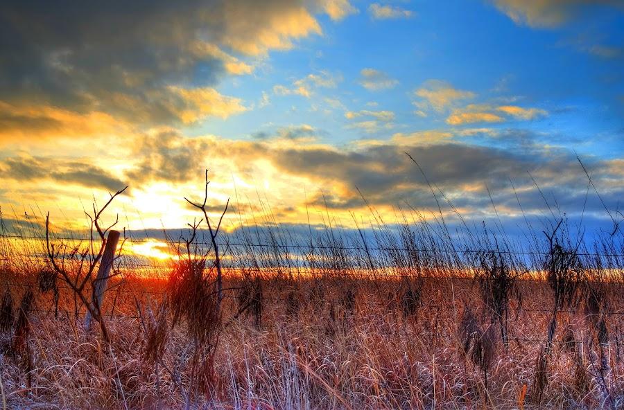 Field by DE Grabenstein - Landscapes Prairies, Meadows & Fields ( grasses, field, fence, pasture, sunset )