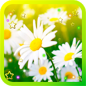 Camomile Flower live wallpaper
