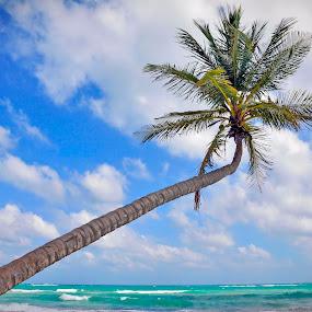 the palm tree by Dan Baciu - Nature Up Close Trees & Bushes ( carribean, coconut, dreams, playa del carmen, thailand, beach, vacance, romance, exotic, island, coconat, blue sky, bora bora, lagoon, dream, cocos, honey moon, mexico, dream island, turquoise, beach view, barbados, bali · mexico · tropical · carribe · thailand · sea · paradise · island · holiday · palm · tree · phangan · carribian · view · koh · tulum · tao · samui, koh samui, coconut tree, summer, thay, tulum, maldives )