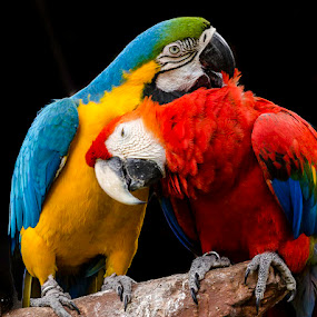I Love You by Dennis Gaspersz - Animals Birds ( djg,  )