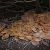 Large Mushroom Colony