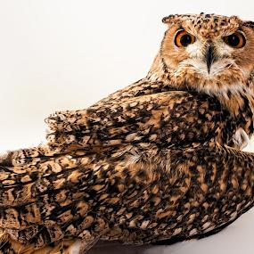 by John Bonanno - Animals Birds