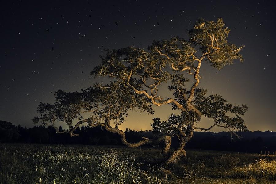 Dancing Tree by Matheus Dalmazzo - Nature Up Close Trees & Bushes ( itapetininga, dancing, cinestudio, tree, stars, night, starscape, nightscape )