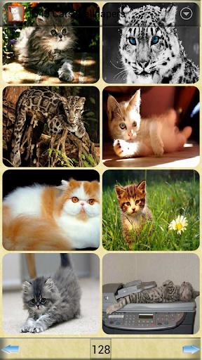 1043貓壁紙