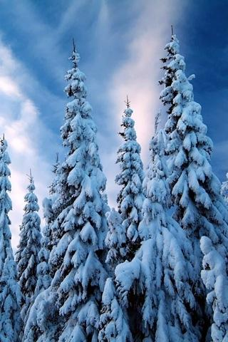 Cool Winter Color Wallpaper - screenshot