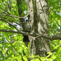 Birds in New Jersey