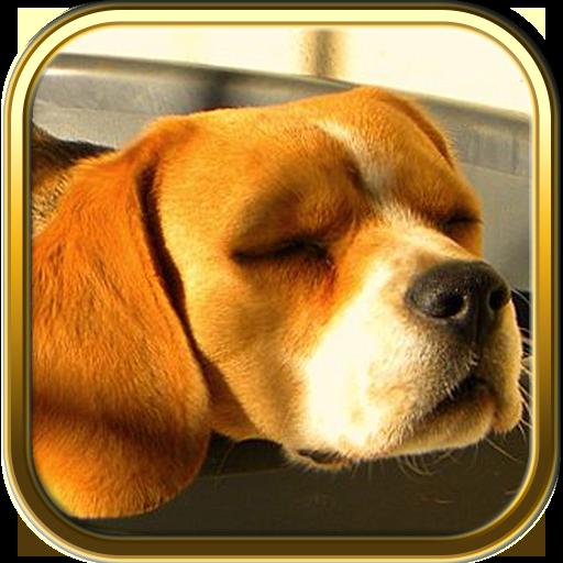 Free Beagle Puzzle Games LOGO-APP點子
