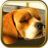 Free Beagle Puzzle Games