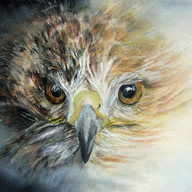 Fledgeling Hawk by Linda Woodward - Drawing All Drawing ( bird, bird of prey, nature, wildlife, fledgeling, young, animal )