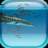 Whale shark and Sardines