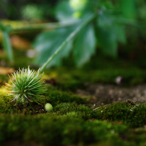 small world by Sylvia Kuzmanova - Nature Up Close Leaves & Grasses ( grass, green, leaves )
