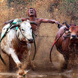 hysteria... by Hendra Nasri - Sports & Fitness Rodeo/Bull Riding ( sport )