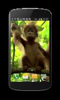 Screenshot of Baby Monkey Live Wallpaper