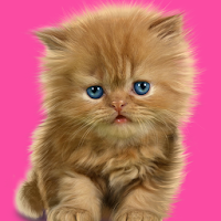Baby Cat, Cute Live Wallpaper 1.9.0