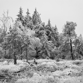 Frozen Fog by Martin Seraphin - Landscapes Forests ( winter, nature, fog, ice, landscape, black and white, b&w )