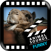 Best Funny Animals Sounds