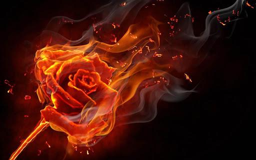 Rose Wallpaper  screenshots 5